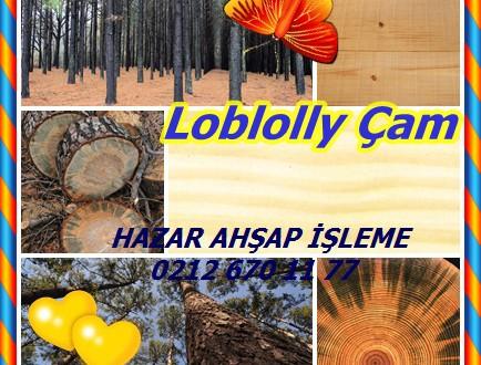 Loblolly çamı, Güney Çam,Pinus taeda,oldfield çam, North Carolina çam, Arkansas çam, çam shortleaf.
