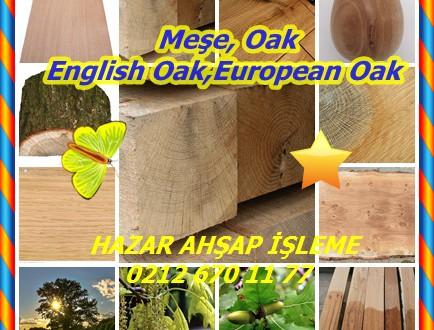 English Oak,European Oak,Kaya meşesi,İngilizce Meşe, Avrupa Meşe,Quercus robur, Meşe Kereste