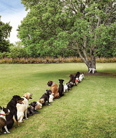 dogs-need-trees