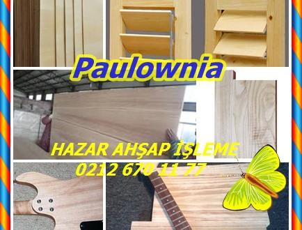 Paulownia, Kraliyet Paulownia, Prenses Ağacı, Kiri, Paulownia tomentosa
