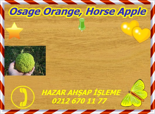 osage-orange-sealed