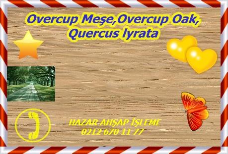 overcup-oak