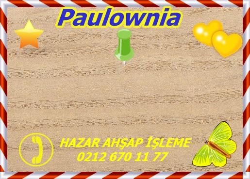 royal-paulownia-gw