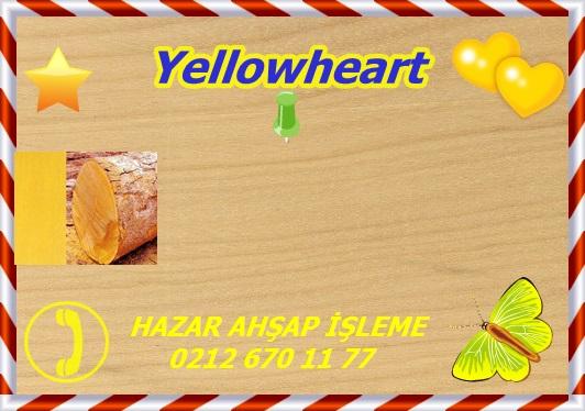 yellowheart (1)