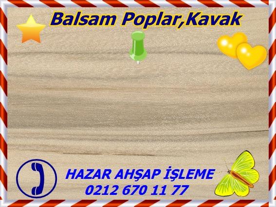 balsam-poplar-jn