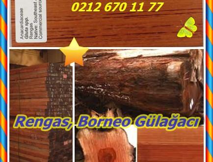 Rengas, (Gluta spp.),Borneo Gülağacı,( Melanorrhoea spp.),Straight maun, siyah vernik ağacı,Hekakoro