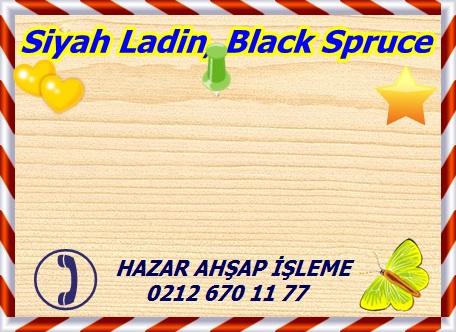 black-spruceSiyah Ladin, Black Spruce