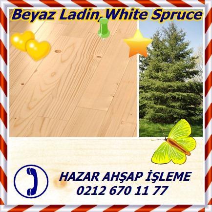 catsBeyaz Ladin,White Spruce