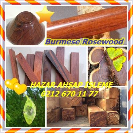 catsBurmese Rosewood9