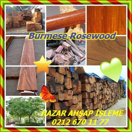 catsBurmese Rosewood99