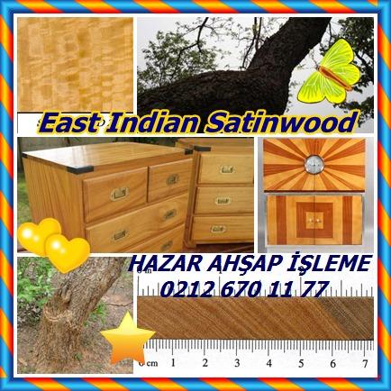 catsEast Indian Satinwood12