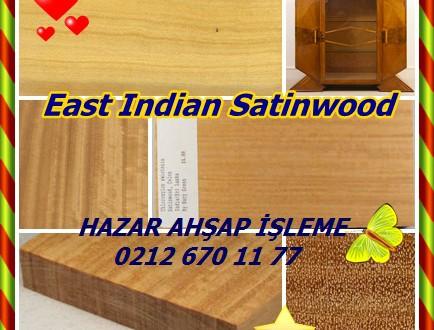 East Indian Satinwood,Seylan SATINWOOD ,(Chloroxylon Swietenia),Billu, Mashwal, Mududad,Indiskt citronträd,pau-cetim, Telugu