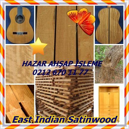catsEast Indian Satinwood545
