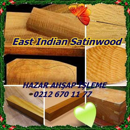 catsEast Indian Satinwood7576