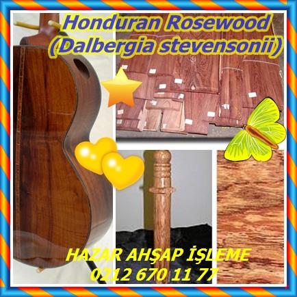 catsHonduran Rosewood Dalbergia stevensonii