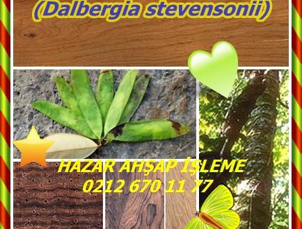 Honduran Rosewood ,(Dalbergia stevensonii), Nogaed, rosul, Honduras Gülağacı ,rosul,honduraspalisander