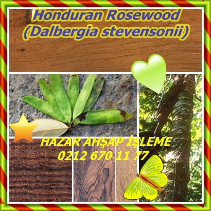 catsHonduran Rosewood ,(Dalbergia stevensonii)