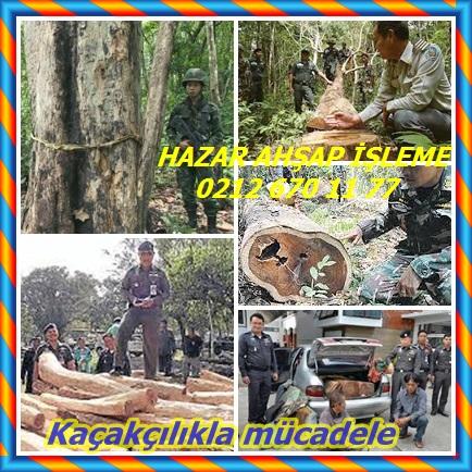 catsHong Kong Siam gül ağacı hırsızlığı frenlemek için hareket