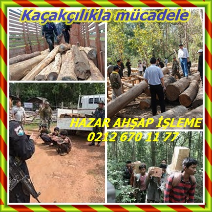 catsHong Kong Siam gül ağacı hırsızlığı frenlemek için hareket222