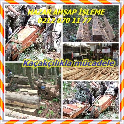 catsHong Kong Siam gül ağacı hırsızlığı frenlemek için hareket333