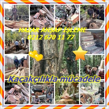 catsHong Kong Siam gül ağacı hırsızlığı frenlemek için hareket55