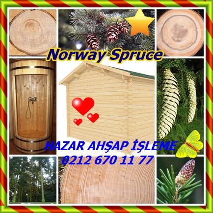 catsNorway Spruce
