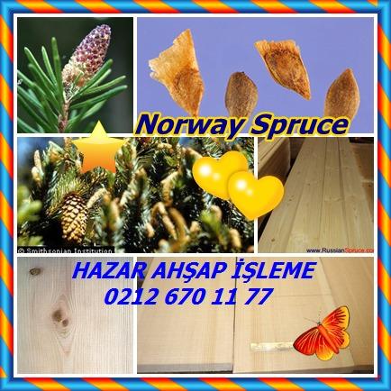 catsNorway Spruce454