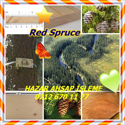 catsRed Spruce5