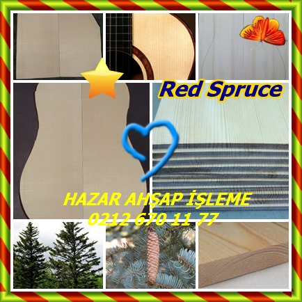 catsRed Spruce66