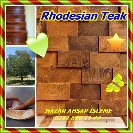 catsRhodesian Teak13