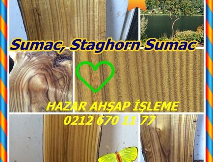 Sumak,Sumac, Staghorn ,(Rhus typhina),staghorn sumac, stag-horn sumach, velvet sumac