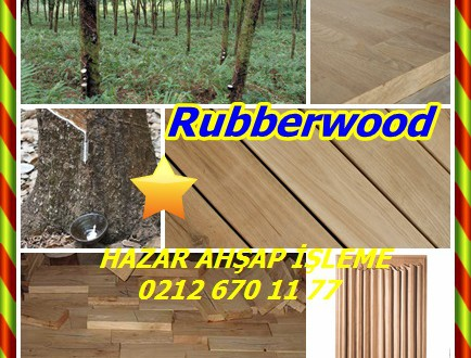 Rubberwood, (Hevea brasiliensis),Arbol de CAUCHO, Jebe, Para kauçuk, Parakautschukbaum, Seringueira, Sharinga, şırınga