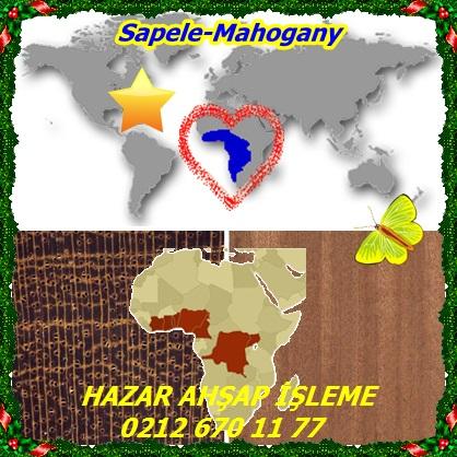 catsSapele-mahogany6655
