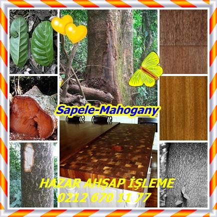 catsSapele-mahogany7