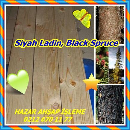 catsSiyah Ladin, Blackk Spruce ,(Picea mariana)h