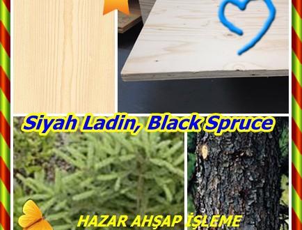 Siyah Ladin, Black Spruce ,(Picea mariana), bataklık ladin, bataklık ladin, EPINETTE noire