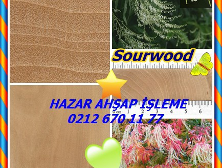 Sourwood, (Oxydendrum arboreum),Kuzukulağı Ağacı