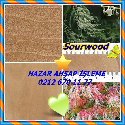 catsSourwood, Kuzukulağı Ağacı