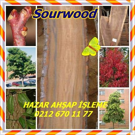 catsSourwood, Kuzukulağı Ağacıopp