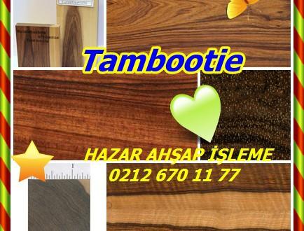 Tambootie ,(Spirostachys africana),Afrika maun ağacı, Afrika sandal, Cape sandal ağacı,baş ağrısı ağacı, atlama fasulye ağacı, muconite. , Tamboti, Tumtamboti. (En) . Sandalo Africano., Sandalo. (PO) . Msarakana. (Sw)
