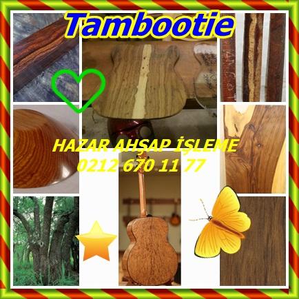catsTambootie678