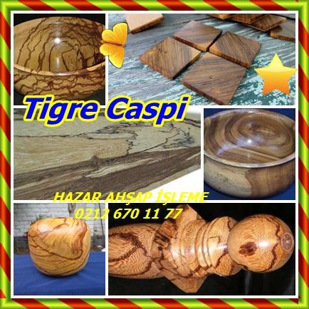 catsTigre Caspi12