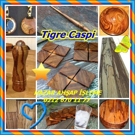 catsTigre Caspi123