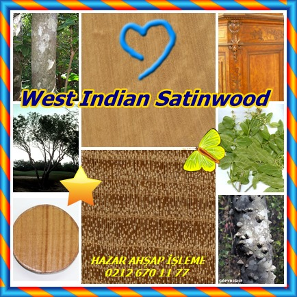 catsWest Indian Satinwood12