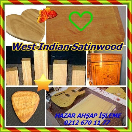 catsWest Indian Satinwood344