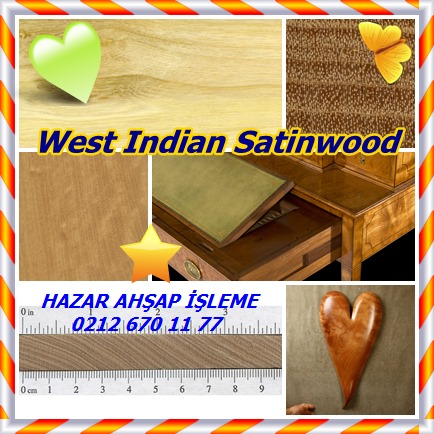 catsWest Indian Satinwood4554