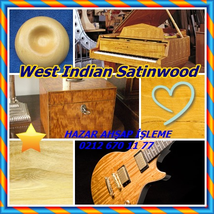 catsWest Indian Satinwood7678