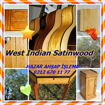 catsWest Indian Satinwood8756
