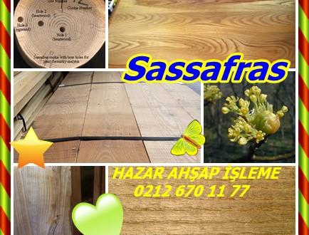 Sassafras ,(Sassafras albidum), Saxifras, Çay Ağacı, Mitten Ağacı, Cinnamonwood