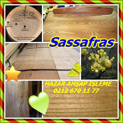 catscatssafsafras242
